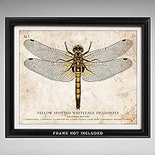 dragonfly scientific illustration