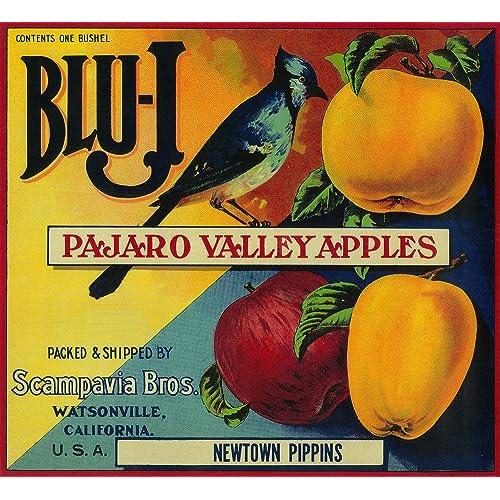 Horse Man o/' War Washington Apple Vintage Fruit Crate Label Repro FREE SHIPPING