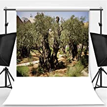 Eternal Olive Tree Photography Backdrop,143596 for Photo Studio,Flannelette:6x10ft