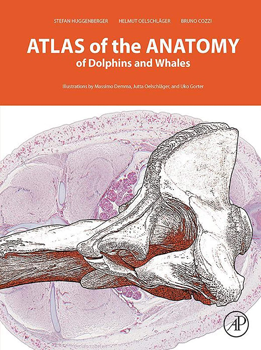真実に東ティモール固執Atlas of the Anatomy of Dolphins and Whales (English Edition)