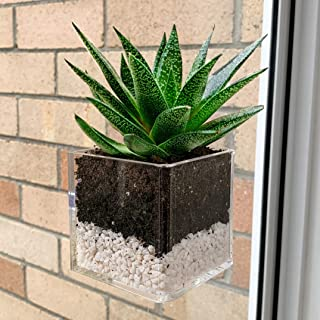 Kurraba Window Suction Plant Pot - Square Shape, Window Planter with Suction Cup for Succulent, Cactus, Flower, Herbs, Han...