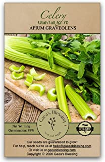 Sponsored Ad - Gaea's Blessing Seeds - Celery Seeds 1000+ Seeds Tall Utah 52-70 Heirloom Non-GMO 89% Germination Rate
