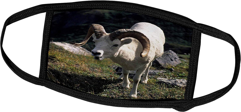 famous 3dRose Dall Sheep Ram Wildlife Denali Alaska US02 Max 54% OFF USA-