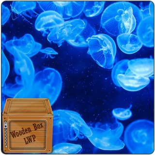 Underwater Bubble Jellyfish Live Wallpaper