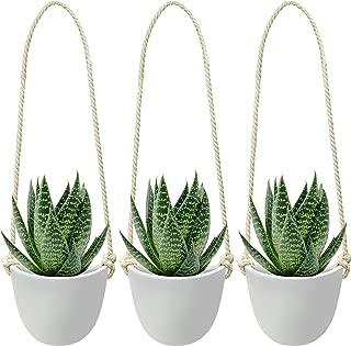 Best terracotta wall planter pots Reviews