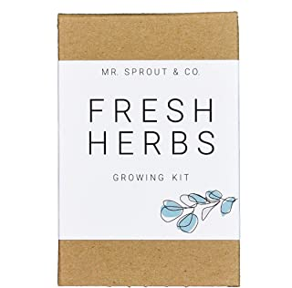 Indoor Herb Garden Seed Starter Kit - Gardening Kit for Growing Fresh Kitchen Herbs | Herb Seeds for Planting Indoors with Grow Kit | Plant Basil Seeds Cilantro Seeds Parsley Plants - By Mr Sprout