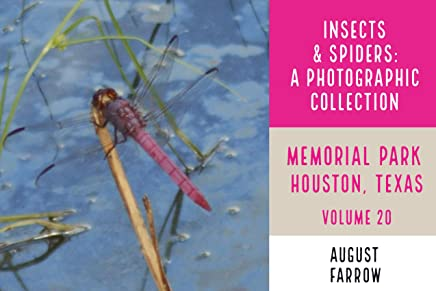 Insects & Arachnids: A Photographic Collection: Memorial Park: Houston Texas - Volume 20 (Arthropods of Memorial Park) (English Edition)