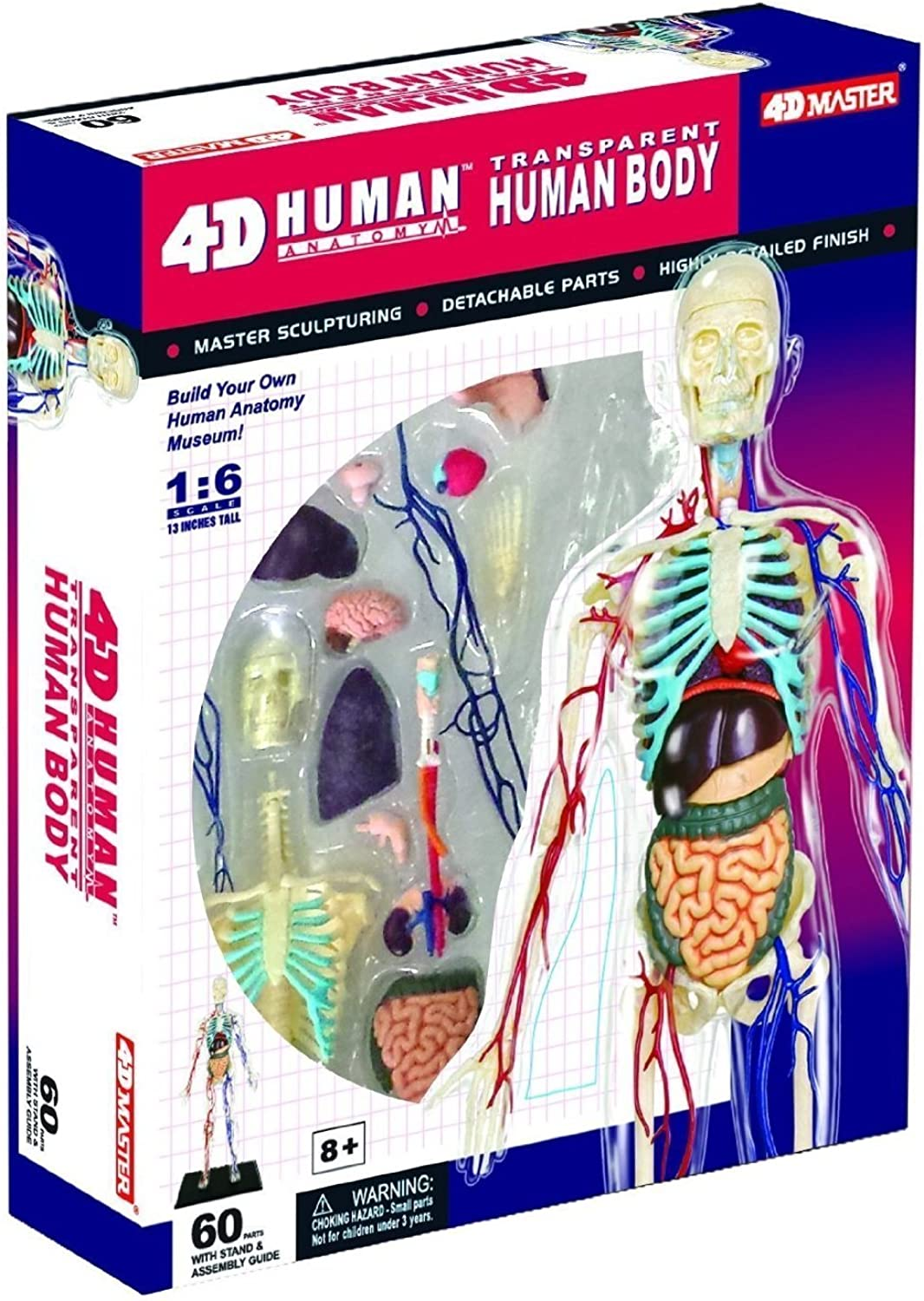 Game  Tedco Wild Science  Transparent Human Body Learning Toys 26070