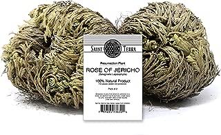 Saint Terra - Rose of Jericho Flower The Resurrection Plant, Pack of 2