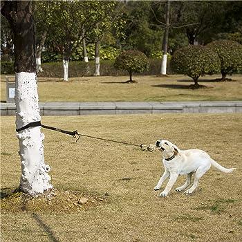 6 ft. Good2Go Forest-Print Dog Leash Blue Original