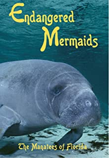 Endangered Mermaids: The Manatees of Florida