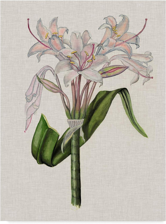 Trademark Fine Art Crinium Lily II by Naomi Mccavitt, 14x19