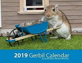 Best gerbil meets mouse publishing Reviews