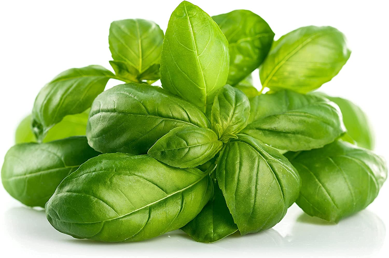 Basil Seeds 25% OFF Genovese 250+ Heirloom GMO Ocimum 25% OFF Non basi