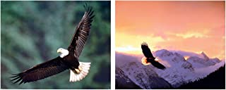 Flying Bald Eagle Bird Sunset Wildlife Animal Picture Two Set 16×20 Wall Decor Art Print Poster