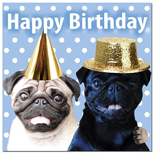 703af3cbe22 Pug Birthday Card  Amazon.co.uk
