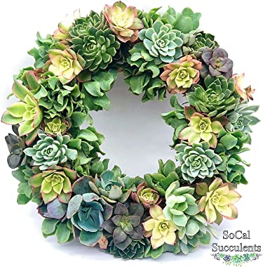 """Succulent Wreath - Live and Real Succulents - Colorful Living Wreath - 8"""" Frame"""