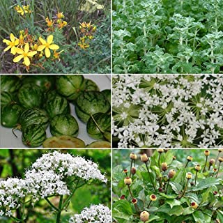Medicinal Herb Garden Seed Collection #9 - A 6 Variety Pack of Rare Medicinal Herb Seeds! FROZEN SEED CAPSULES - The Very ...