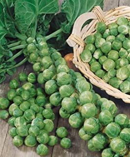 brussels sprouts price