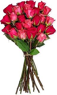 Benchmark Bouquets 2 Dozen Blushing Beauty Roses, No Vase (Fresh Cut Flowers)