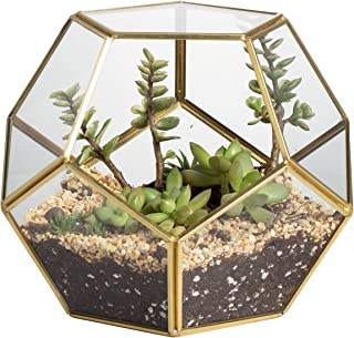 NCYP Brass Glass Pentagon Regular Dodecahedron Geometric Terrarium Container Desktop Planter for Succulent Fern Moss Air Plants Holder Miniature Outdoor Fairy Garden Gift