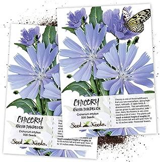 Seed Needs, Chicory/Italian Dandelion (Cichorium intybus) Twin Pack of 500 Seeds Each Non-GMO