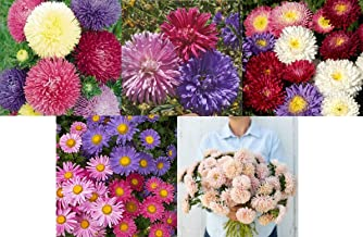 David's Garden Seeds Collection Set Flower Aster Open Pollinated DB5134 (Multi) 5 Varieties 2050 Non-GMO, Open Pollinated Seeds