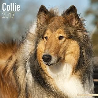 Collie Calendar 2017 - Dog Breed Calendars - 2016 - 2017 wall calendars - 16 Month by Avonside