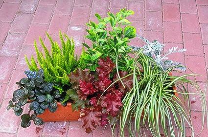 Balkon den winterpflanzen für Winterpflanzen für