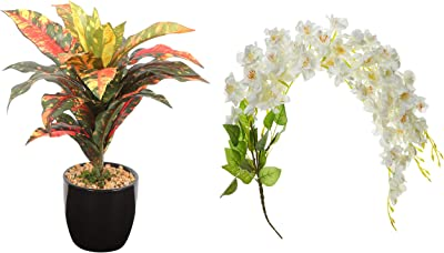 Fourwalls Artificial Hanging Butterfly Orchid Flower Bunches 3 Branch (80 cm Tall, White) + Artificial Dracaena Bonsai Plant in A Ceramic Vase (25 Leaves)