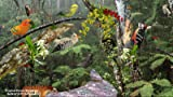 Tropical Forest [Download]