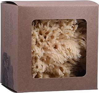 Baudelaire, Sea Sponge Caribbean Wool 5.5 Inch, 1 Each
