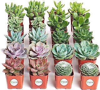 Jiimz Succulents