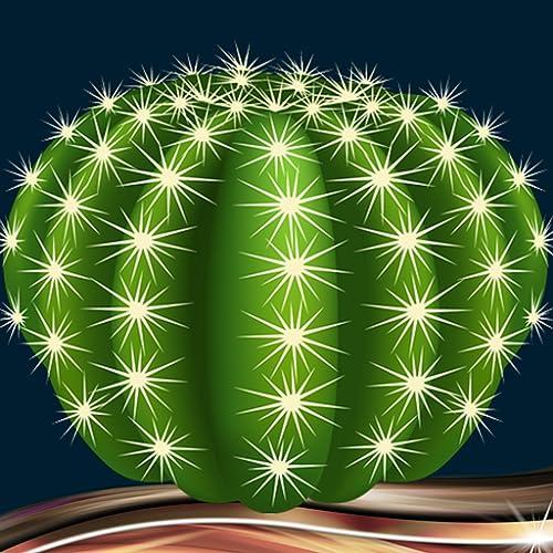 Kaktus-Foto-Collage