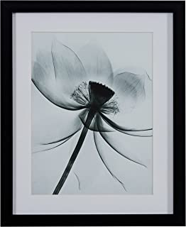 Matted Flower X-Ray Photograph, Black Frame, 18