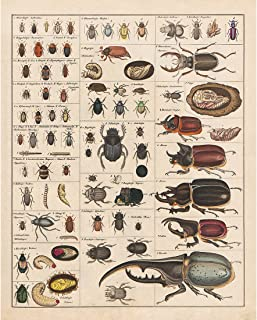 Meishe Art Vintage Poster Print Insects Collection Species Identification Reference Chart Entomology Diagram Classroom Club Wall Decor