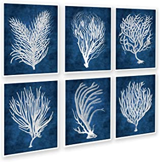 Gnosis Picture Archive Navy Beach Decor Wall Art Sea Fan Sea Coral Set of 6 Unframed Art Prints Sea_Corals_Inverted_navy6C