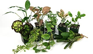 20 Gallon Tropical Vivarium Plant Kit