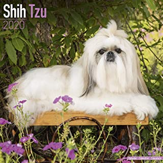 Shih Tzu Calendar 2020 - Dog Breed Calendar - Wall Calendar 2019-2020