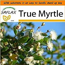 SAFLAX - Garden in the Bag - True Myrtle - 30 seeds - Myrtus communis
