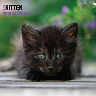 Kitten 2018 Mini Calendar