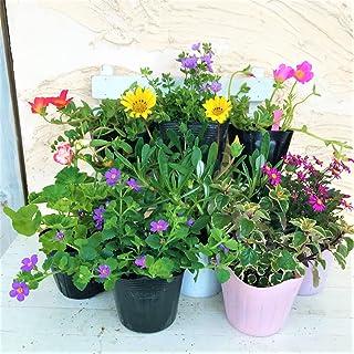 はなみどり 季節のおまかせ寄せ植えセット 8株 花苗 園芸 ガーデニング