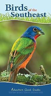 Birds of the Southeast: Your Way to Easily Identify Backyard Birds
