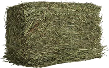 Oxbow Animal Health Western Timothy Hay For Pets, 25-Pound