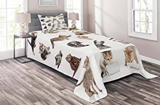 Lunarable Cat Coverlet Set Twin Size, Group of Funny Playful Baby Kitten Pet Scottish Tabby Striped Pussu Animal Design, 2 Piece Decorative Quilted Bedspread Set with 1 Pillow Sham, White Grey