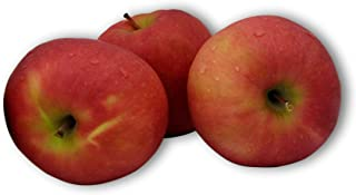 Kauffman Orchards Homegrown Pink Lady Apples, Fresh Picked in Lancaster County, Pennsylvania (Box of 8)