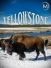 Best yellowstone documentary 2018 Reviews