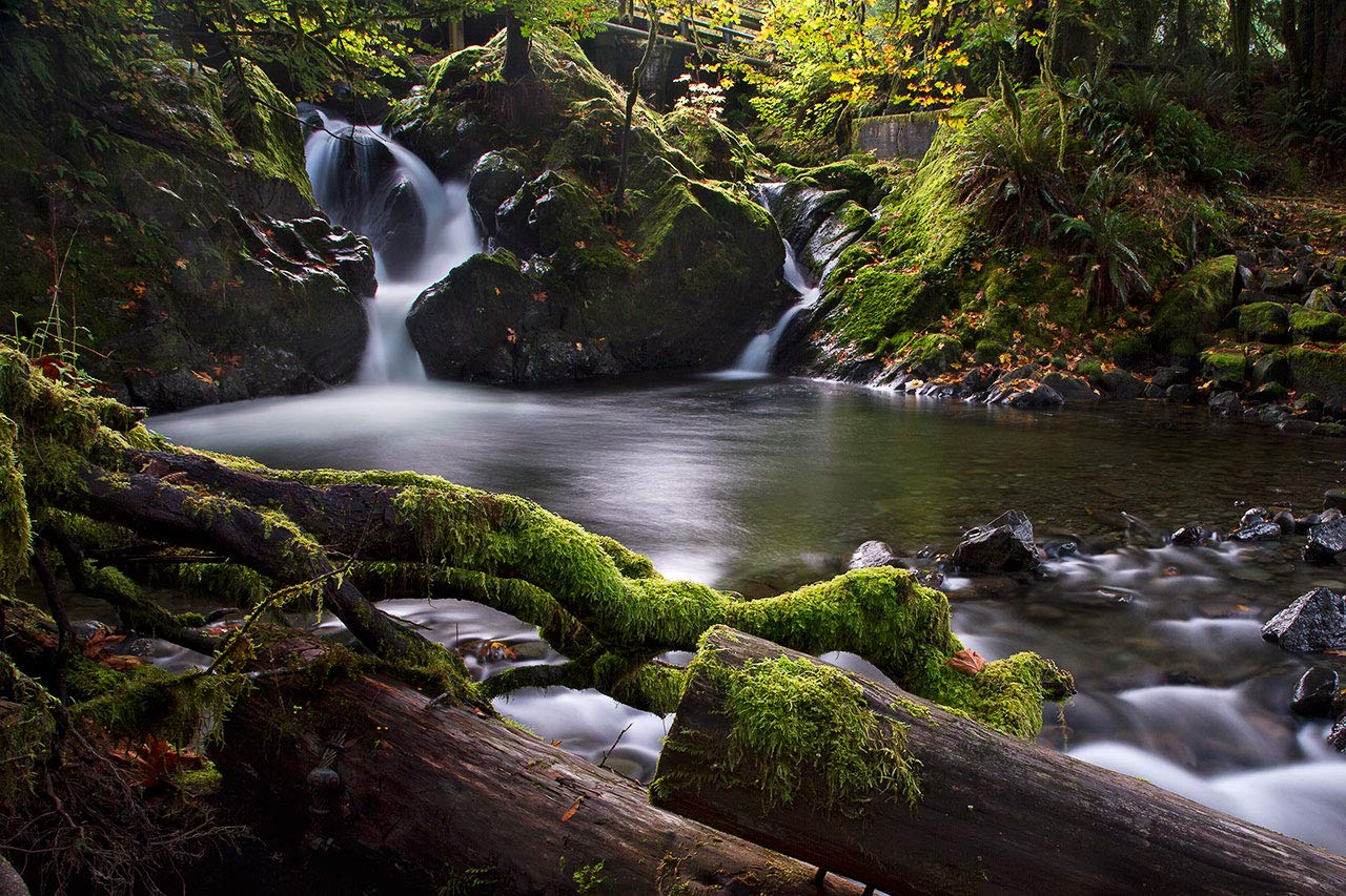 supreme Olympic National Park Photography Waterfall Lake Louisville-Jefferson County Mall Photo Quinault