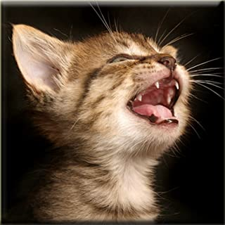 Best play cat sounds Reviews