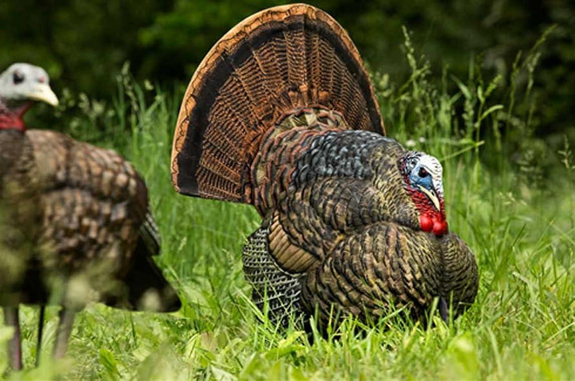 Avian-X Strutter Turkey Decoy